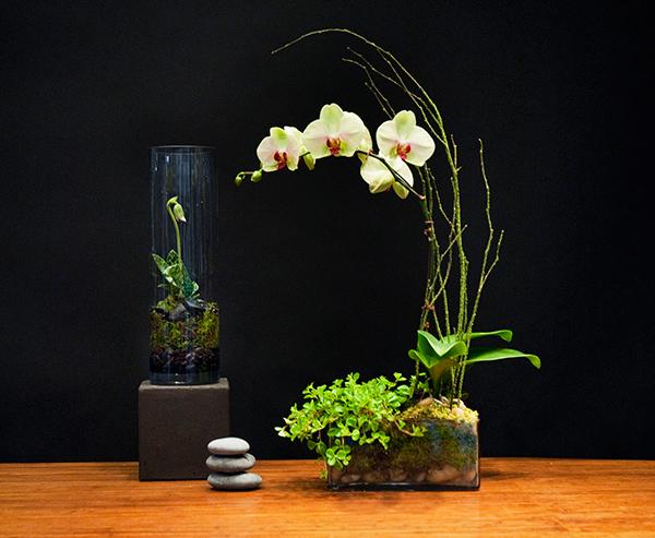 orchids-110701-1131