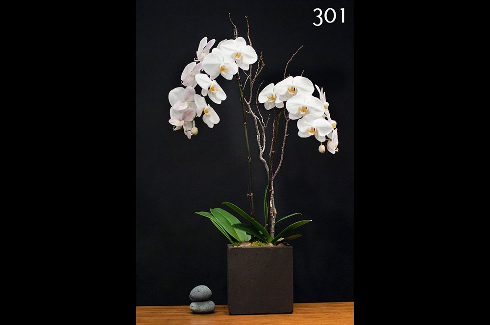 Orchid Plants #301 – Young Flowers Seattle
