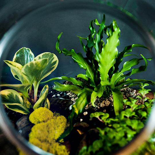 square-plants